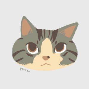 タオルをかけられた猫