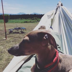 おうちでもキャンプでも使える!自立式ハンモックは最高のキャンプギア!!