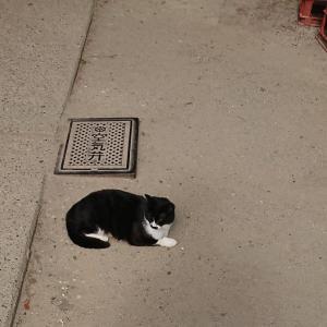【猫好き必見】伏見稲荷大社の猫たち【猫スポット・稲荷山】