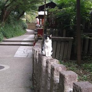 【猫好き必見】伏見稲荷大社の猫たち/9月編【猫スポット・稲荷山】