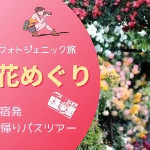 薔薇と紫陽花とパワースポット 日帰りバスツアー【フォトジェニック旅~初夏の茨城花名所めぐり~新宿発】