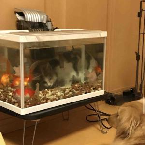 犬と猫と金魚