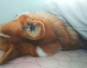 術後38日目-エリザベスカラーを外して寝てみる