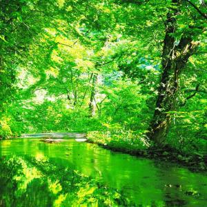 緑のイリュージョン