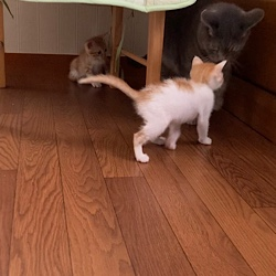 子猫にビビるピーちゃん