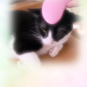 ダイソーで見つけた猫も喜ぶブラシ
