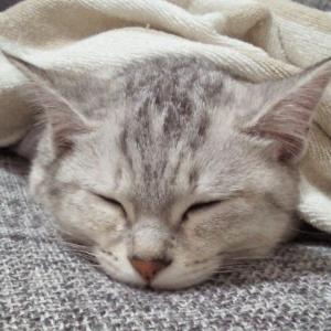 お家の猫さんその1(^ー^)