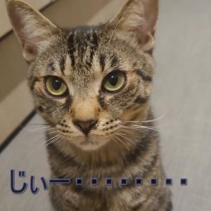 お家の猫さん達その3🥰とと君(*^-^*)💖