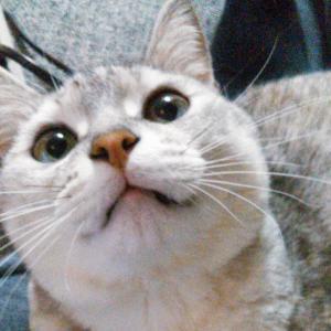 猫に多い病気、肝リピドーシスとは?原因、治療法、治療期間、予防方法などは?