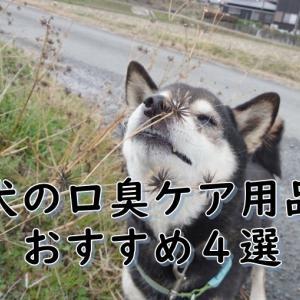 犬の口臭の原因は?予防方法と、おすすめの対策ケア用品4選😊