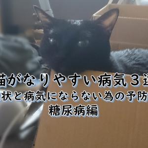 猫がなりやすい病気3選!症状と病気にならない為の予防方法。糖尿病編!