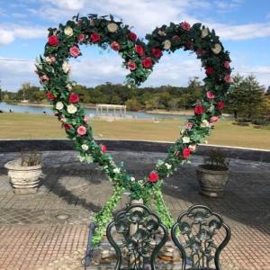 大阪☆蜻蛉池公園の薔薇園