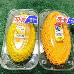 【再生栽培】種からのマンゴーの育て方【ナムドクマイ&マハチャノ】