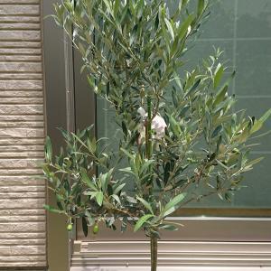 自転車処分とオリーブの木