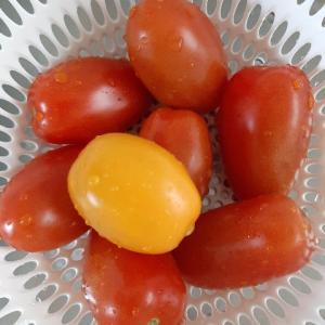 トマトは美しい