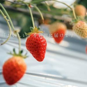 無添加トマトジュース、いちご、ブルーベリーなどギフトにもおすすめ!農業コンサルティング会社「株式会社リコペル」