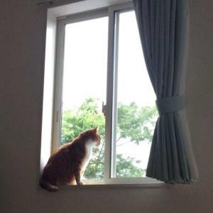 窓際で隠れたい