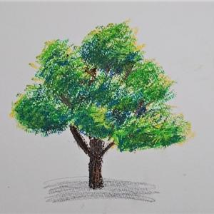 【クレヨン画】初心者がYouTube動画を見ながらクレヨンで樹木を描いてみた