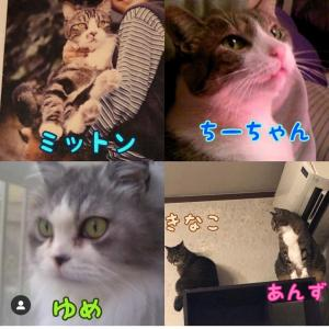 ep.42    ご質問への回答  猫ネコねこcat…