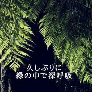 久しぶりに緑の中で深呼吸