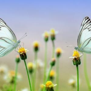 【ホルモン補充療法体験談④】ホルモン補充療法 18日目の感想
