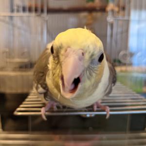 鳥のあくび。人間に連鎖するか!?・・・検証結果→連鎖確定!