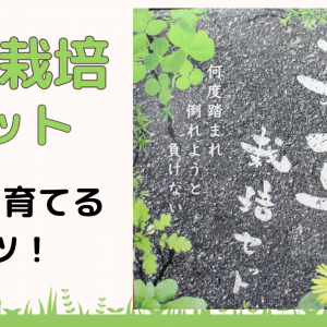 【雑草栽培セット レビュー】自宅で雑草を育てるコツ!