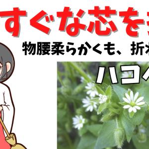 ハコベってどんな花?│まっすぐな芯を持ち、しなやかな花