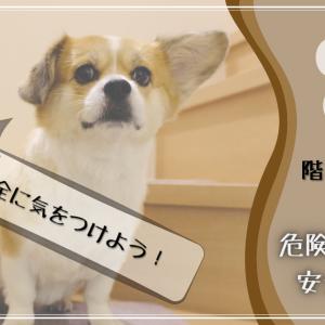 愛犬に階段を上り下りさせても大丈夫?危険性と安全対策を紹介します
