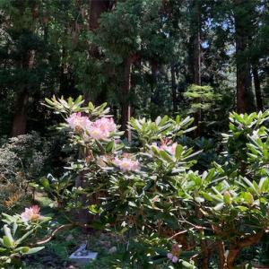 神社仏閣巡り/奈良県 室生寺