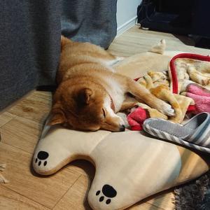 遊んだ後のハルの寝顔♡