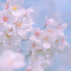 Vol.020|お花見