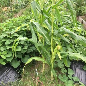 初心者の市民農園体験!料金や注意点に育てた野菜までレポート!