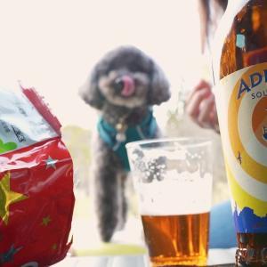 クラフトビール撮影会!我慢できずイギリスのビールを飲んじゃった。