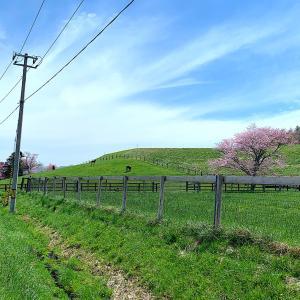 春は日高方面のドライブが最高