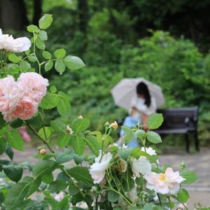 靭公園(大阪府大阪市)とバラ園