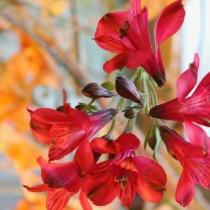International Flower Contest 2017(JA/EN)