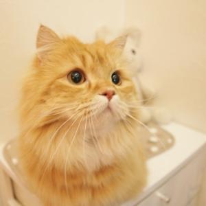 うちの猫用品②