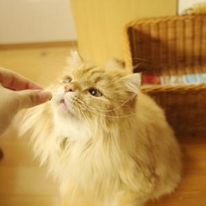 猫に好かれたい(JA/EN)