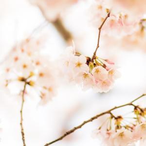 3月ですね。もう外は春陽気に包まれ・・・