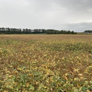 2021.09.22 追分の大豆畑