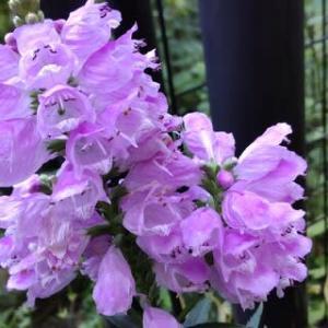 庭の花たちのこと