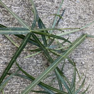 外でハダニケア養生中の植物をイエナカに戻す。ボトルツリー。
