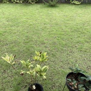 【理想と現実】素人の芝庭