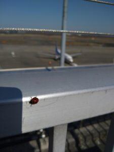 【飛行機】アップグレードの落とし穴!?【クラスJ】