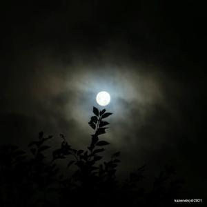 お月見は月山がいいのだろう