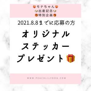 2021年8月4日にモナちゃんの出産を予定しています子犬迎え入れを検討頂いた方への感...