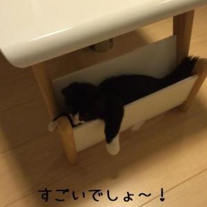いいとこ見っけた! 2014/10