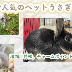 日本で人気のペットうさぎ10選!種類、特徴、チャームポイントは?