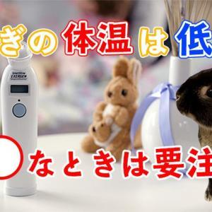 うさぎの正常な体温はどれぐらい?低い体温のときは要注意!